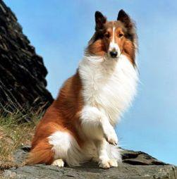 Lassie251